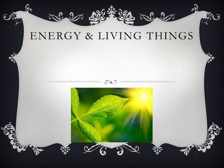 ENERGY & LIVING THINGS. PRODUCERS  A producer is an autotrophic organism that serves as a source of energy for other organisms in a food chain. Producers.