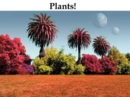 Plants!. A plant = a multicellular eukaryote that has a cell wall made of cellulose They develop multicellular embryos They carry out photosynthesis using.