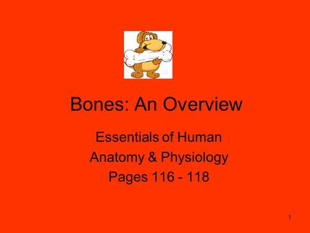 Bones: An Overview Essentials of Human Anatomy & Physiology Pages 116 - 118 1.
