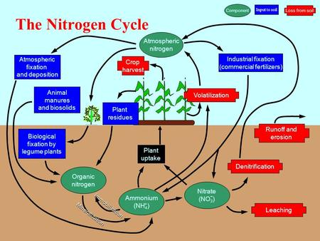 The Nitrogen Cycle Atmospheric nitrogen Atmospheric fixation and deposition Animal manures and biosolids Industrial fixation (commercial fertilizers) Crop.