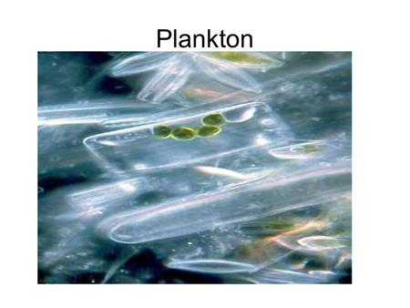 Plankton. Phytoplankton Can't move against currents (float or weakly move) >40% of global primary productivity.