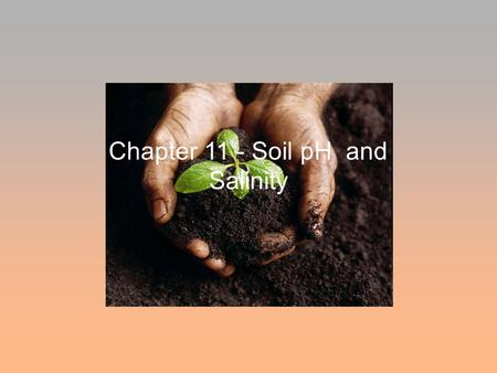 Chapter 11 - Soil pH and Salinity. Soil pH - WHAT is it and WHY is it Important? pH is the concentration of hydrogen ions (H + ) in the soil solution.