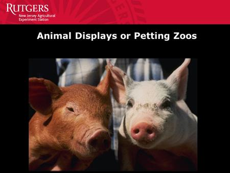 Animal Displays or Petting Zoos. Guidelines for Animal Contact Areas Instruct the public to wash their hands BEFORE and AFTER petting or feeding the animals.