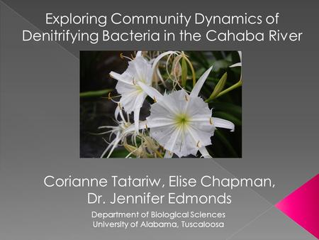 Exploring Community Dynamics of Denitrifying Bacteria in the Cahaba River Corianne Tatariw, Elise Chapman, Dr. Jennifer Edmonds Department of Biological.
