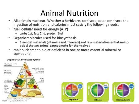 Animal Nutrition All animals must eat. Whether a herbivore, carnivore, or an omnivore the ingestion of nutrition and calories must satisfy the following.