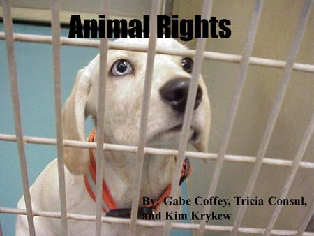 Animal Rights By: Gabe Coffey, Tricia Consul, and Kim Krykew.