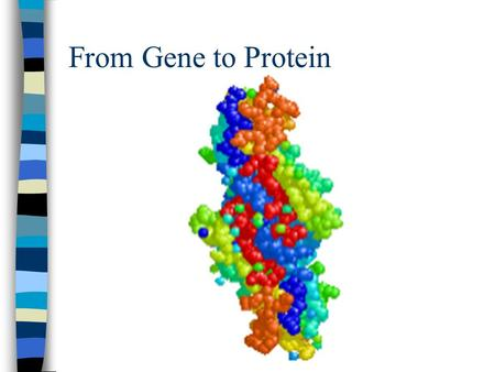 From Gene to Protein. DNA Review n Is made of nucleotides. n Contains deoxyribose sugar n Thymine, Guanine, Cytosine, Adenine n Is a double stranded molecule.