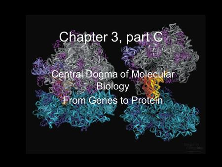 Chapter 3, part C Central Dogma of Molecular Biology From Genes to Protein.