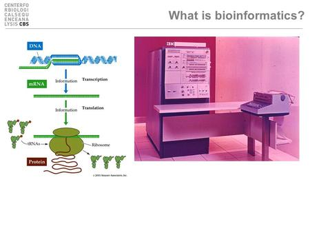What is bioinformatics?. What are bioinformaticians up to, actually? Manage molecular biological data –Store in databases, organise, formalise, describe...