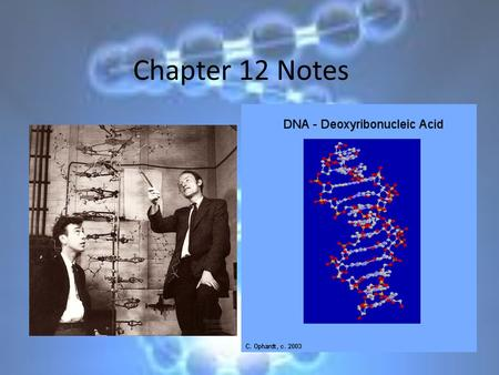 Chapter 12 Notes. A. First Discoveries 1.Griffith- experiment showed that live uncoated bacteria acquired the ability to make coats from dead coated bacteria.