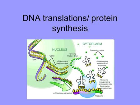 "DNA translations/ protein synthesis. Overview of DNA translation RNA ""translates"" the genetic code from nucleotide bases into proteins. Each type of RNA."