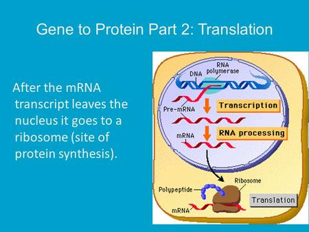 12 3 dna rna and protein synthesis worksheet
