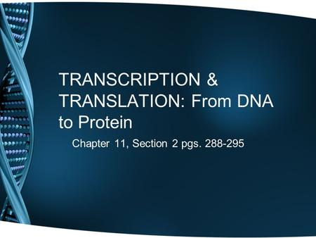 TRANSCRIPTION & TRANSLATION: From DNA to Protein