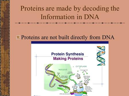 Proteins are made by decoding the Information in DNA Proteins are not built directly from DNA.