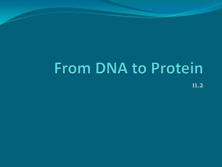11.2. Remember…. Nucleic Acid – one of the BIG FOUR DNA – Deoxyribonucleic Acid Directions for building proteins Nucleotides are building blocks Sugar-