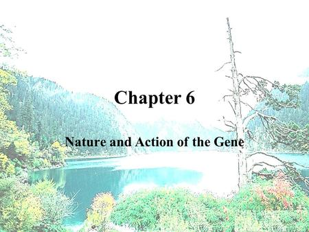 Nature and Action of the Gene