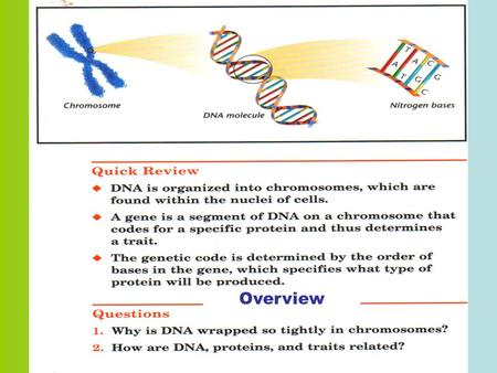 Overview. DNA (Deoxyribonucleic Acid) What is DNA? Deoxyribonucleic acid contains all the genetic information for living organisms. It is a very long.