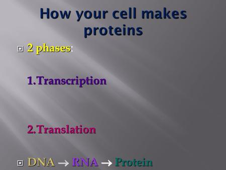  2 phases  2 phases : 1.Transcription 2.Translation  DNA  RNA  Protein.