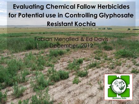 Evaluating Chemical Fallow Herbicides for Potential use in Controlling Glyphosate Resistant Kochia Fabian Menalled & Ed Davis December, 2012.
