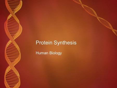 Protein Synthesis Human Biology. DNA Deoxyribonucleic Acid Twisted ladder or double helix Nucleotides Composed of alternating sugar (Deoxyribose) and.