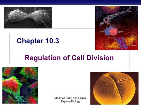 AP Biology Modified from: Kim Foglia, Explore Biology Chapter 10.3 Regulation of Cell Division.