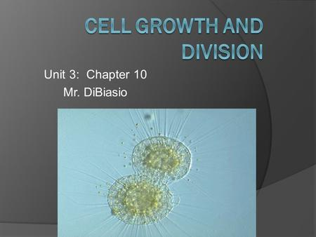 Unit 3: Chapter 10 Mr. DiBiasio. Question?  When a living thing grows, what happens to its cell? Does an animal get larger because each cell increases.