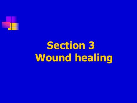 Section 3 Wound healing. 1. Definition: Refers to the body ' s replacement of destroyed tissue by living tissue 2. Stages in healing of wound (1) Escape.