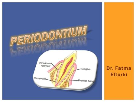 Dr. Fatma Elturki. Periodontium  Its definition and composition. Cementum  Definition.  Physical and chemical characteristics.  Development of Cementum.