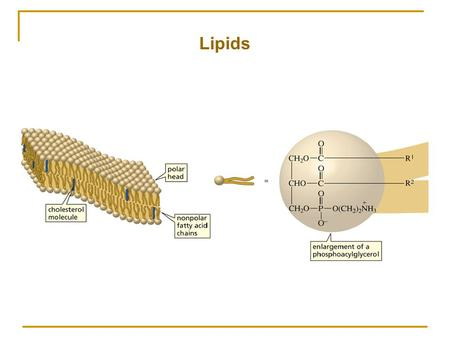 Lipids. Lipids are soluble in nonpolar organic compounds They have a variety of structures and functions.