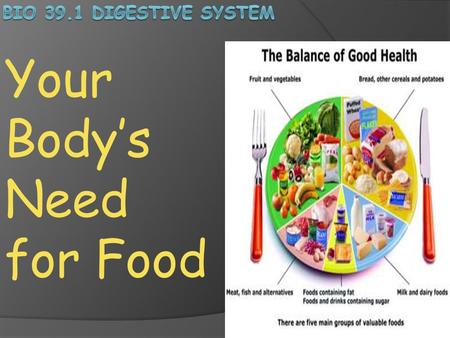 Your Body's Need for Food