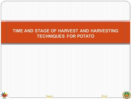 TIME AND STAGE OF HARVEST AND HARVESTING TECHNIQUES FOR POTATO NextEnd.