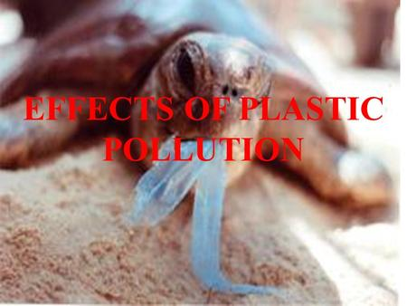 EFFECTS OF <strong>PLASTIC</strong> POLLUTION. B. KALYANI S. NIHARIKA.