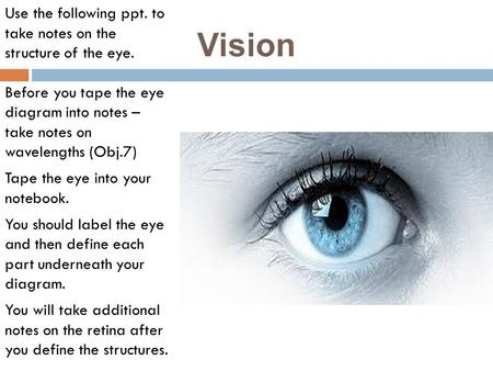 Vision Use the following ppt. to take notes on the structure of the eye. Before you tape the eye diagram into notes – take notes on wavelengths (Obj.7)
