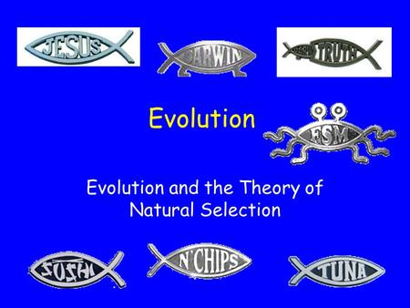 Evolution and the Theory of Natural Selection What is Evolution? The change in gene frequencies in a population over time.