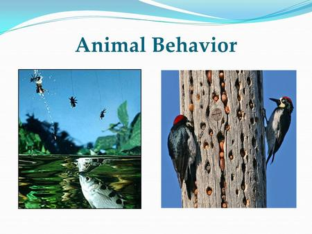 Animal Behavior. Objectives Define behavior Be familiar with the range of animal behavior Understand the methods that ethologists use to study behavior.