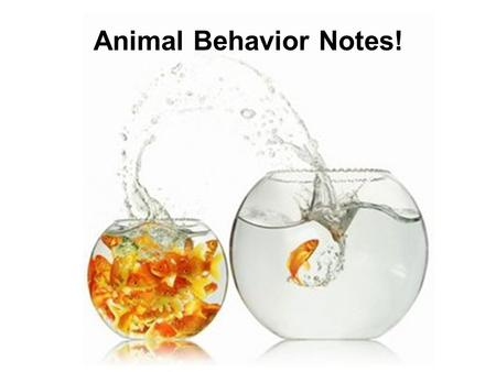 Animal Behavior Notes! ETHOLOGY the study of animal behavior with emphasis on the behavioral patterns that occur in natural environments. Pioneers in.