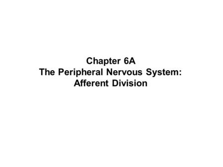 The Peripheral Nervous System: Afferent Division