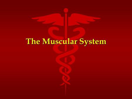 The Muscular System. Functions of Muscle Tissue Movement Facilitation Movement Facilitation Thermogenesis Thermogenesis Postural Support Postural Support.