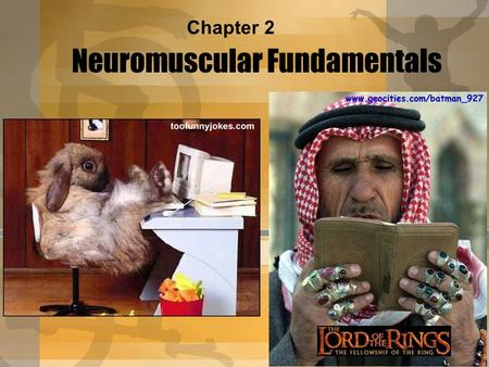 Neuromuscular Fundamentals
