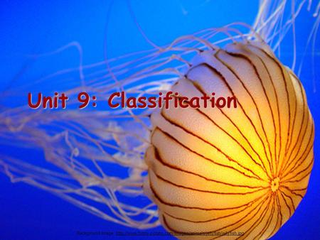 Unit 9: Classification Background Image: http://www.funny-potato.com/images/animals/jellyfish/jellyfish.jpg.