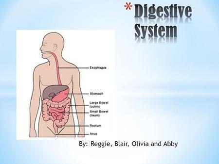 By: Reggie, Blair, Olivia and Abby. Slide 1: Title Page (Digestive System) Slide 2: Table Of Contents Slide 3: What Role Does the Digestive System Play.
