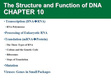 The Structure and Function of DNA CHAPTER 10 Transcription (DNA  RNA) RNA Polymerase Processing of Eukaryotic RNA Translation (mRNA  Protein) The Three.