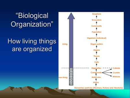 """Biological Organization"" How living things are organized."