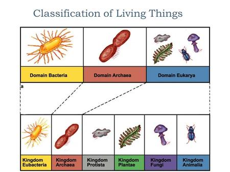 Classification of Living Things A Little History  The Earth is 4.6 billion years old and microbial life is thought to have first appeared between 3.8.