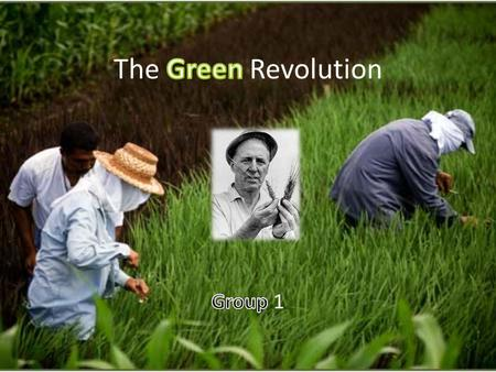 The transformation of agriculture that began in 1944, with the mission of greatly increasing food yields through technology and selective breeding. Was.