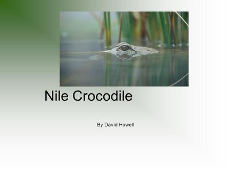 Nile Crocodile By David Howell. Intro It lives in Africa, its tail helps it swim, its name starts with Nile, it eats a bunch, this is a crocodile that.