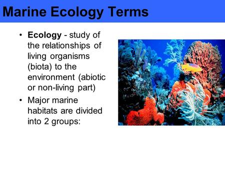 an analysis of the habitat marine ecology and the study of interactions of marine organisms