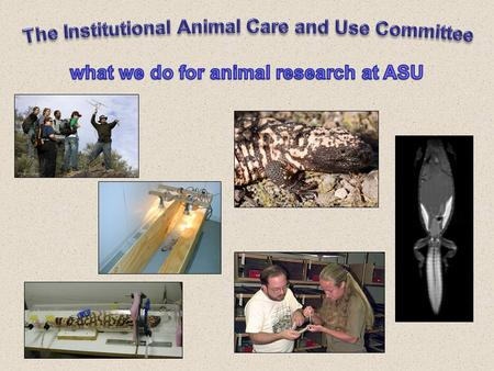 The ASU Animal Use Program A three-legged stool Institutional Official - Jon Harrison Institutional Official - Jon Harrison Institutional Animal Care.