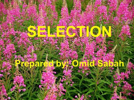SELECTION Prepared by: Omid Sabah. Objectives : By the end of this chapter you will be able to:  Introduction to Selection  What is selection process.