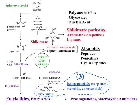 Polysaccharides Glycosides Nucleic Acids Shikimate pathway Aromatic Compounds Lignans aromatic amino acids aliphatic amino acids CH 3 COSCoA ( photosynthesis.